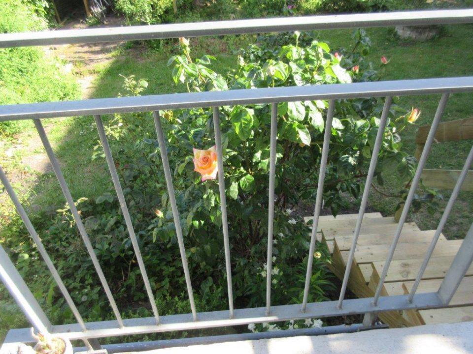 IMG_3676. OK Veranda, trappe og rose. Fin